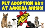 Amoeba Pet Adoption
