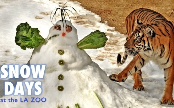 Snow Days at The Zoo