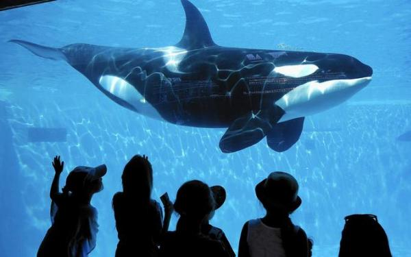SeaWorld may be bouncing back from 'Blackfish' backlash