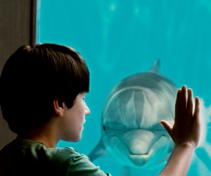 Dolphin Tale (Warner Bros. Pictures)