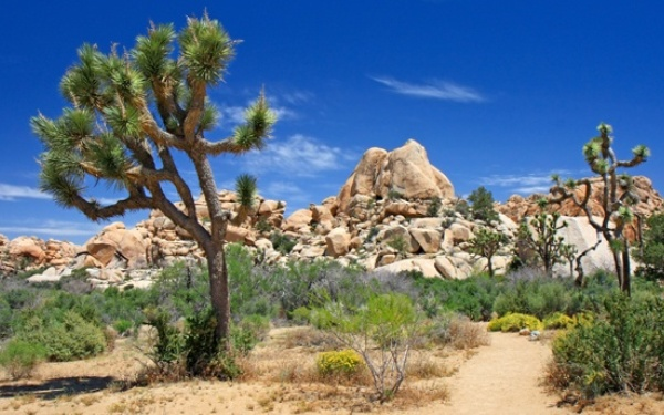 Joshua Tree National Park, three other California parks earn 'F' for air quality