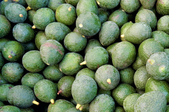 Is eating avocados bad for the environment?