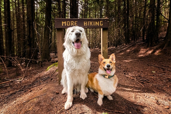 Hiking shape is different for each person — and dog