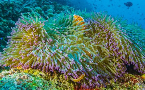 Beauty and devastation in 'Life' on the Great Barrier Reef