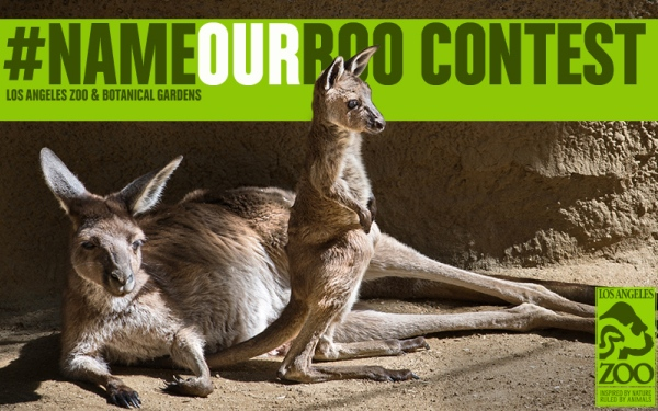 LA Zoo's #NameOurRoo contest rare opportunity for public to name animal