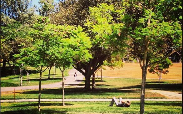 UCSB, UCI Make 'Greenest Colleges' List
