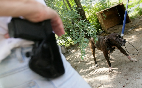 L.A. Sees Rise in Illegal Animal Fights