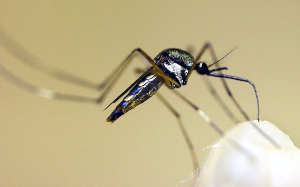 West Nile Virus Puts Return to UC Berkeley on Hold for Modesto Teen