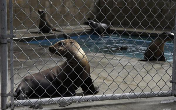 Search is on for those who contaminated water in sea lion rehab center