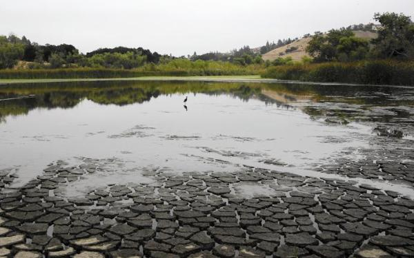 Survival of Chatsworth Reservoir's 'ecology pond' is debated