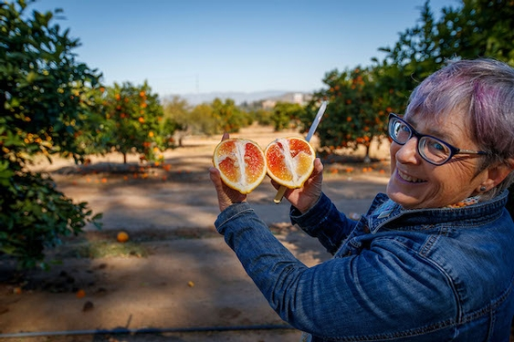 In the Noah's Ark of citrus, caretakers try to stave off a fruit apocalypse
